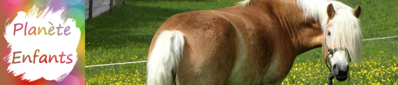 planete-enfants-banniere-cheval